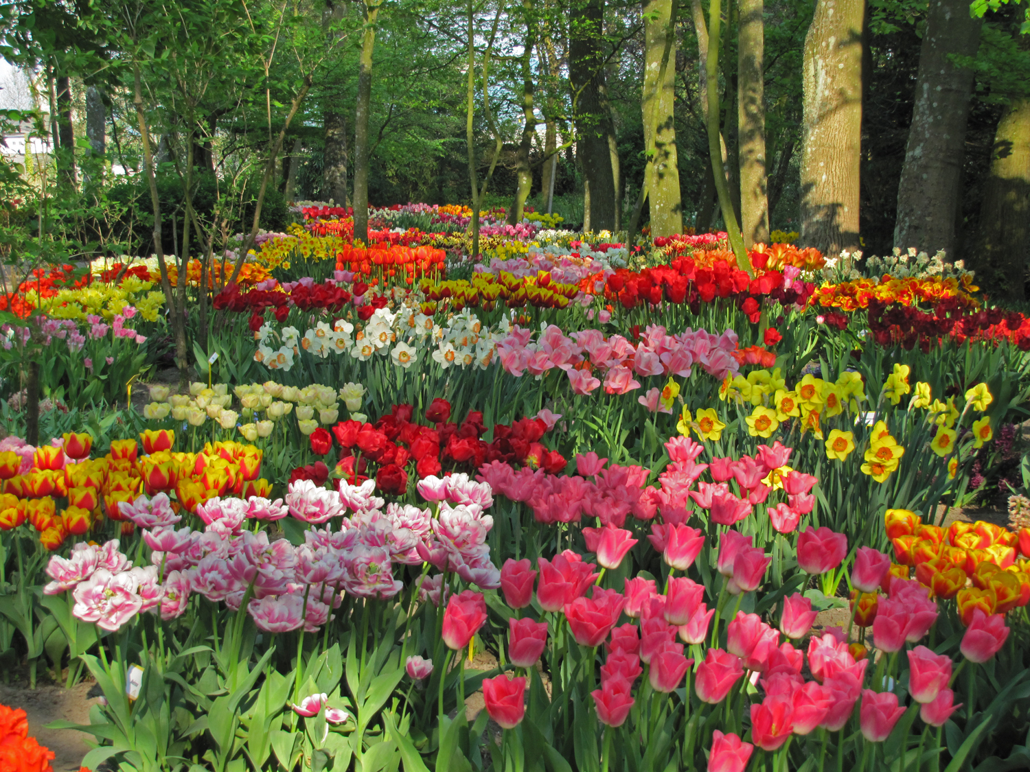 Wholesale Dutch Flower Bulbs Landscaping with Flower Bulbs