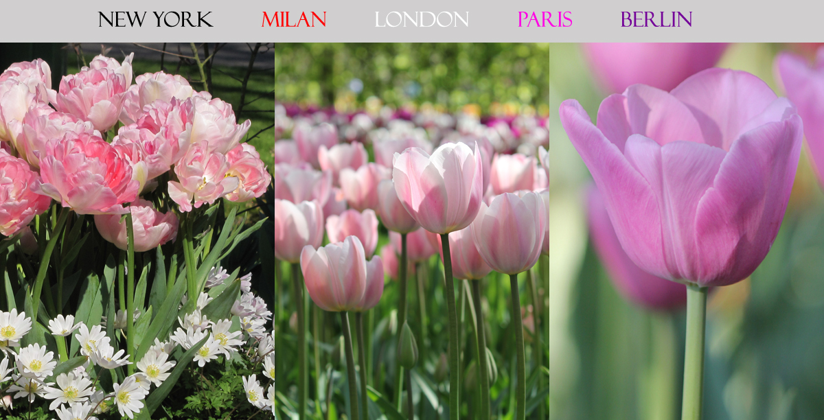 Paris Tulip Collection