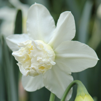 Narcis White Marvel